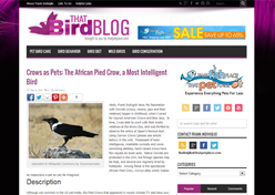 That Bird Blog
