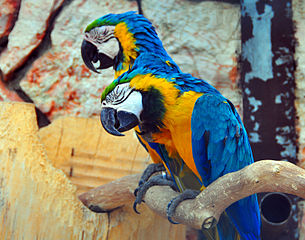 Parrot Illness In Winter | That Bird Blog