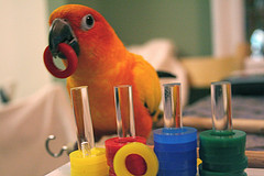 Dutch Law Bans Hand-Rearing of Young Parrots: What's Your Opinion?