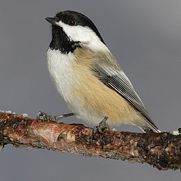 Helping Spring Birds: Bird Houses, Foods and Baths for Small, Shy Species