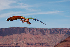 flying-in-moab