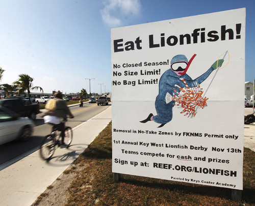 Lionfish banned in florida that fish blog for Florida commercial fishing license
