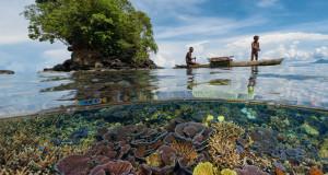 NOAA lists 20 species of corals under the Endangered Species Act