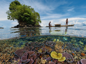 remote coral reef
