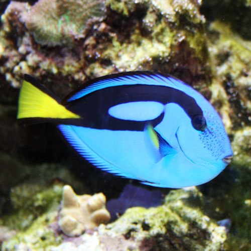 217264 That Fish Blog