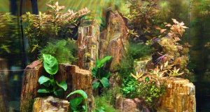 """A New Display Tank: An Amano-inspired Planted """"Canyon"""""""