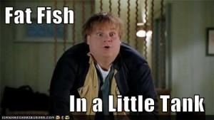 fat-fish-little-tank