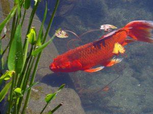 Aquarium Advice Information Articles And News That Fish Blog