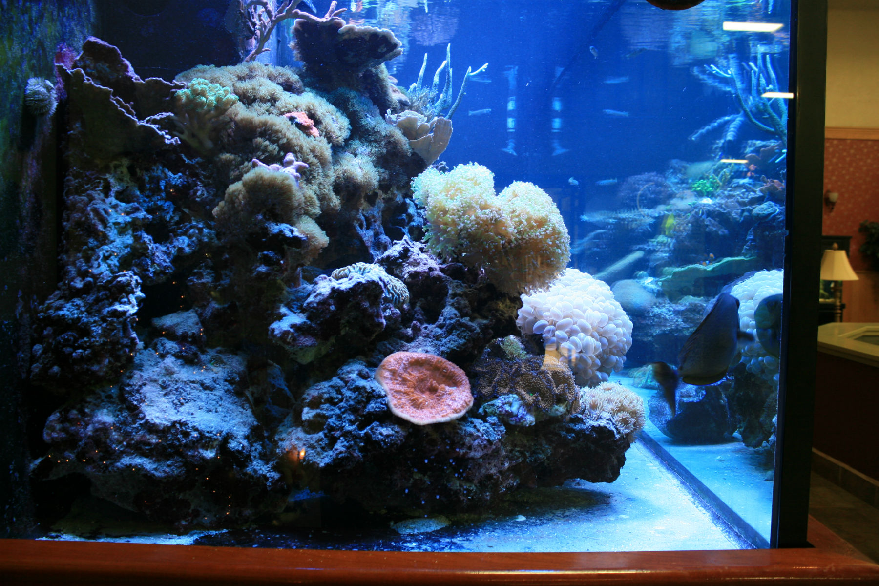The water in the aquarium smells, changed, all the same. what to do