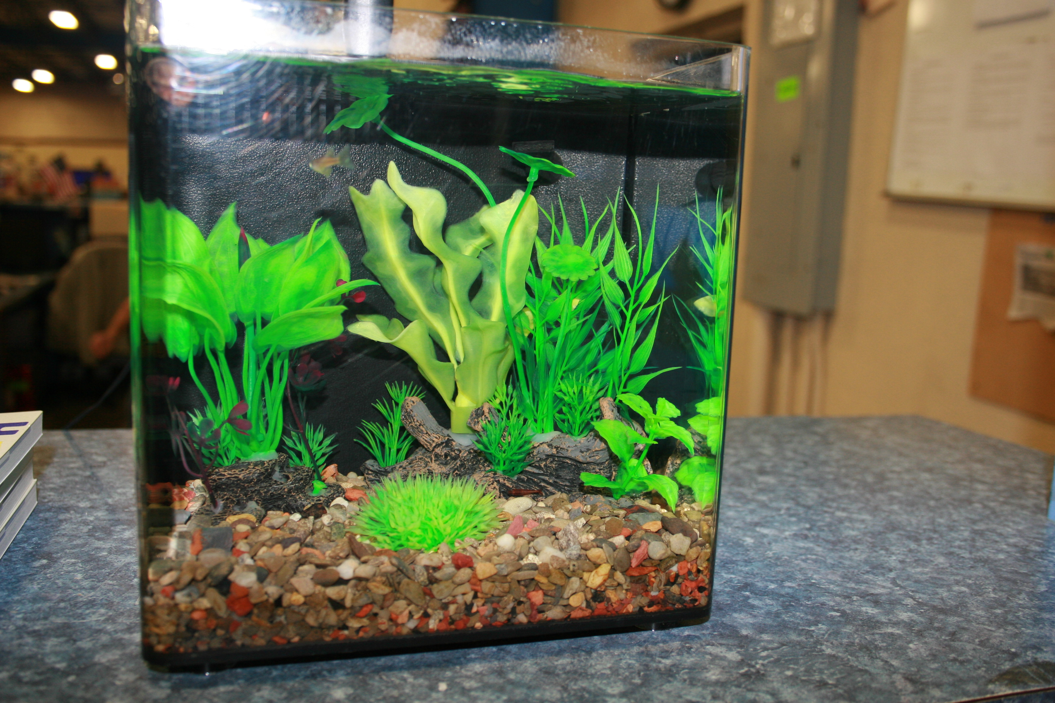 Aquarium Gravel and Substrate vs Bare-Bottom tanks: Pros and Cons