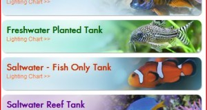Top Aquarium & Fish Articles This Month – May 2014