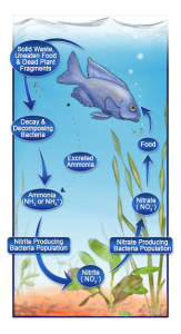 The Nitrogen Cycle and Aquatic Science Fair Projects