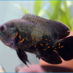 Top Aquarium & Fish Articles This Month – April 2014