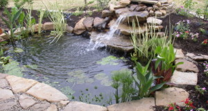 Backyard Ponds: A Quick Springtime Maintenance And Care Guide