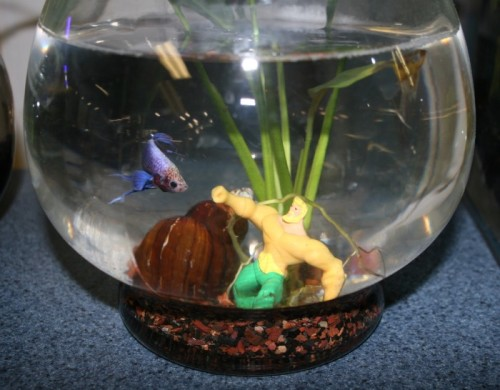 Adding a personal touch to your aquarium d cor that fish for How to make ice in a fish tank