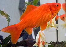 The Best Aquarium Filters for Goldfish