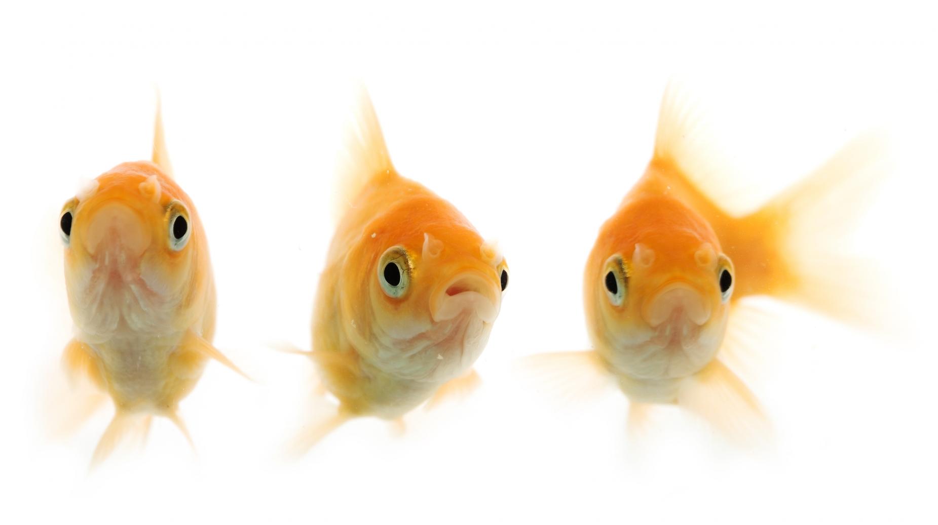 Aquatic science fair projects for aquarium lovers for Fishing science fair projects