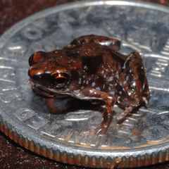 New Reptile and Amphibian Species in 2013