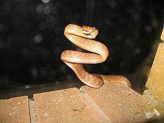 Guam Brown Tree Snake Eradication Program | That Reptile Blog
