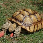 Turtles and Tortoises:  5 You Should Never Keep as Pets
