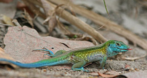 Your First Pet Lizard: a Checklist of Things to Consider