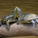 Choosing the Best Turtle Filters: 10 Vital Points