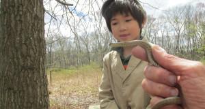 Spring Field Trips: Amphibians, Reptiles, Invertebrates, Birds