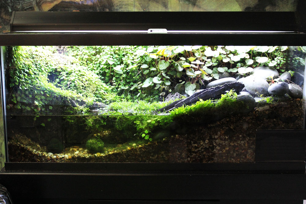 Exciting New Exotic Animal Displays in our Reptile Room 10 Gallon Fish Tank Ideas