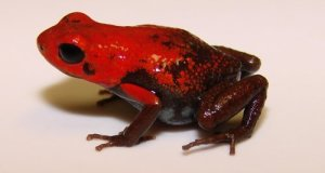 New Species of 2014: Fantastic Reptiles, Amphibians and Pterosaurs