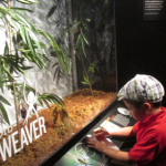 American Museum of Natural History:  A Visit to the Live Spider Exhibit